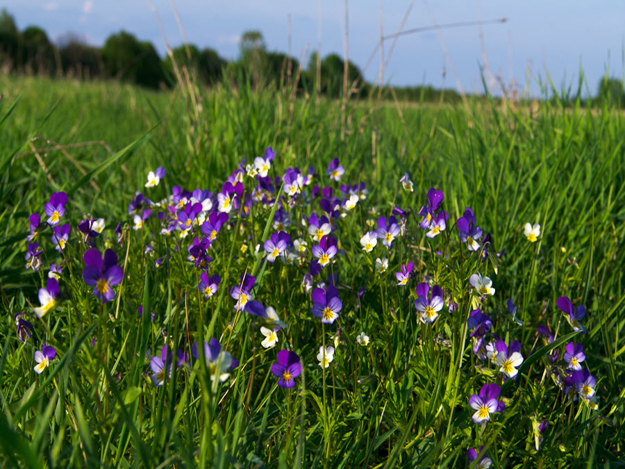 кефире полевые цветы подмосковья фото с названиями хочу целовать