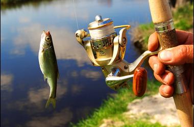 пшеница на рыбалку в микроволновке