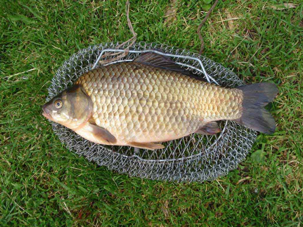 Прогноз клева рыбы на неделю в Украине Каландарь рыбака