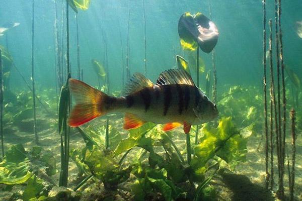 рыбалка зимой  Видео о рыбалке и ловле рыбы