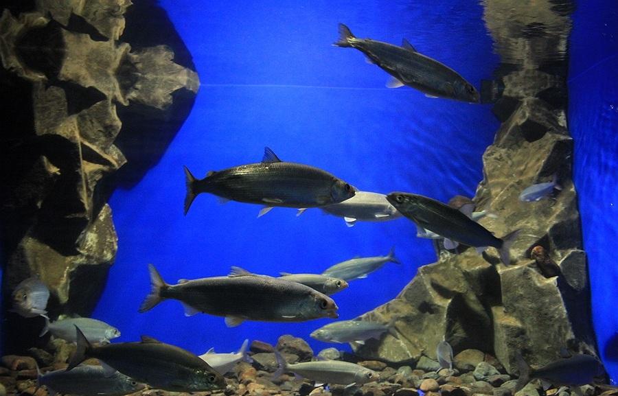 озеро байкал фото рыб обитающих в нем