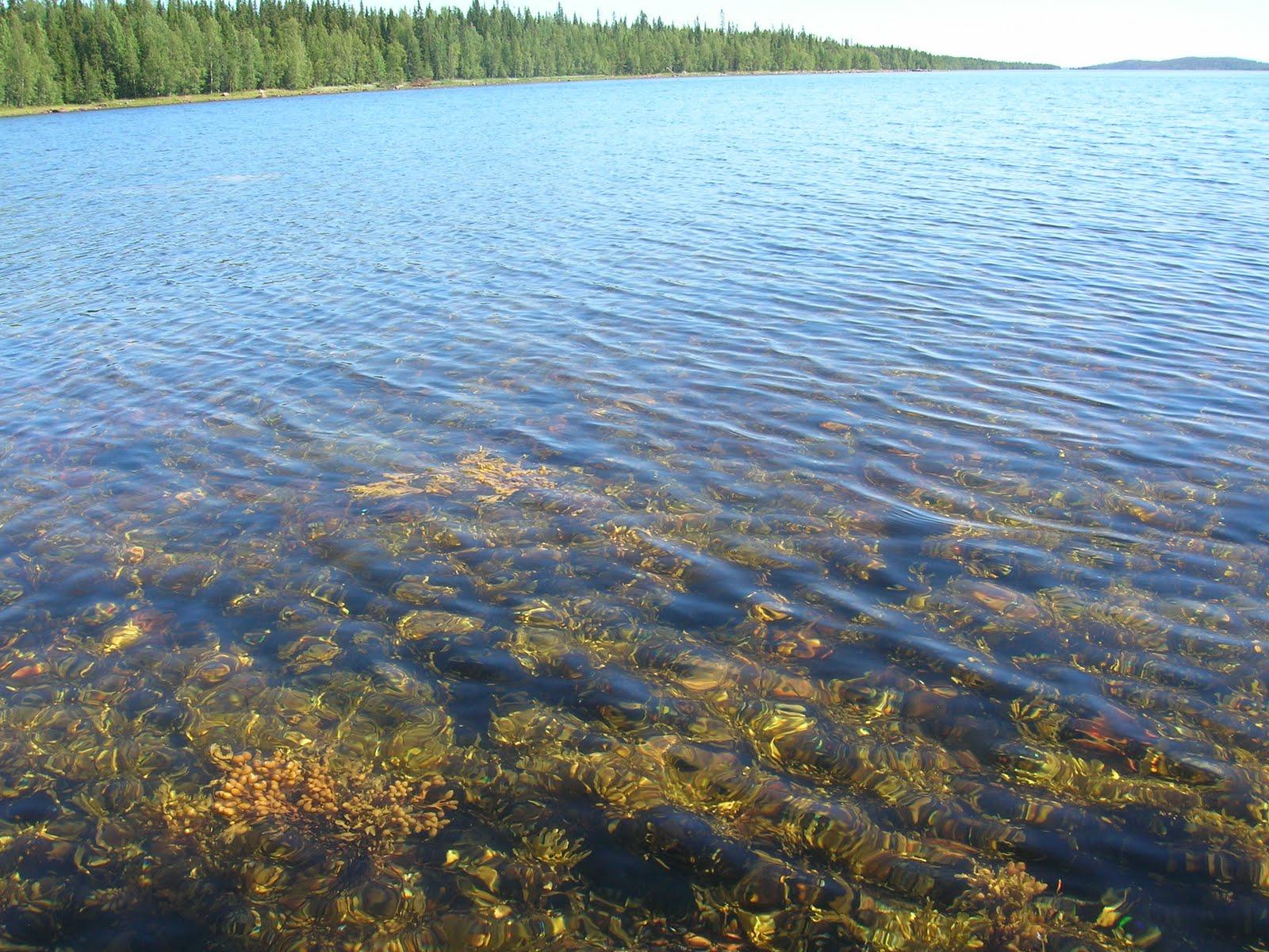 Белое море фото 15 фотография