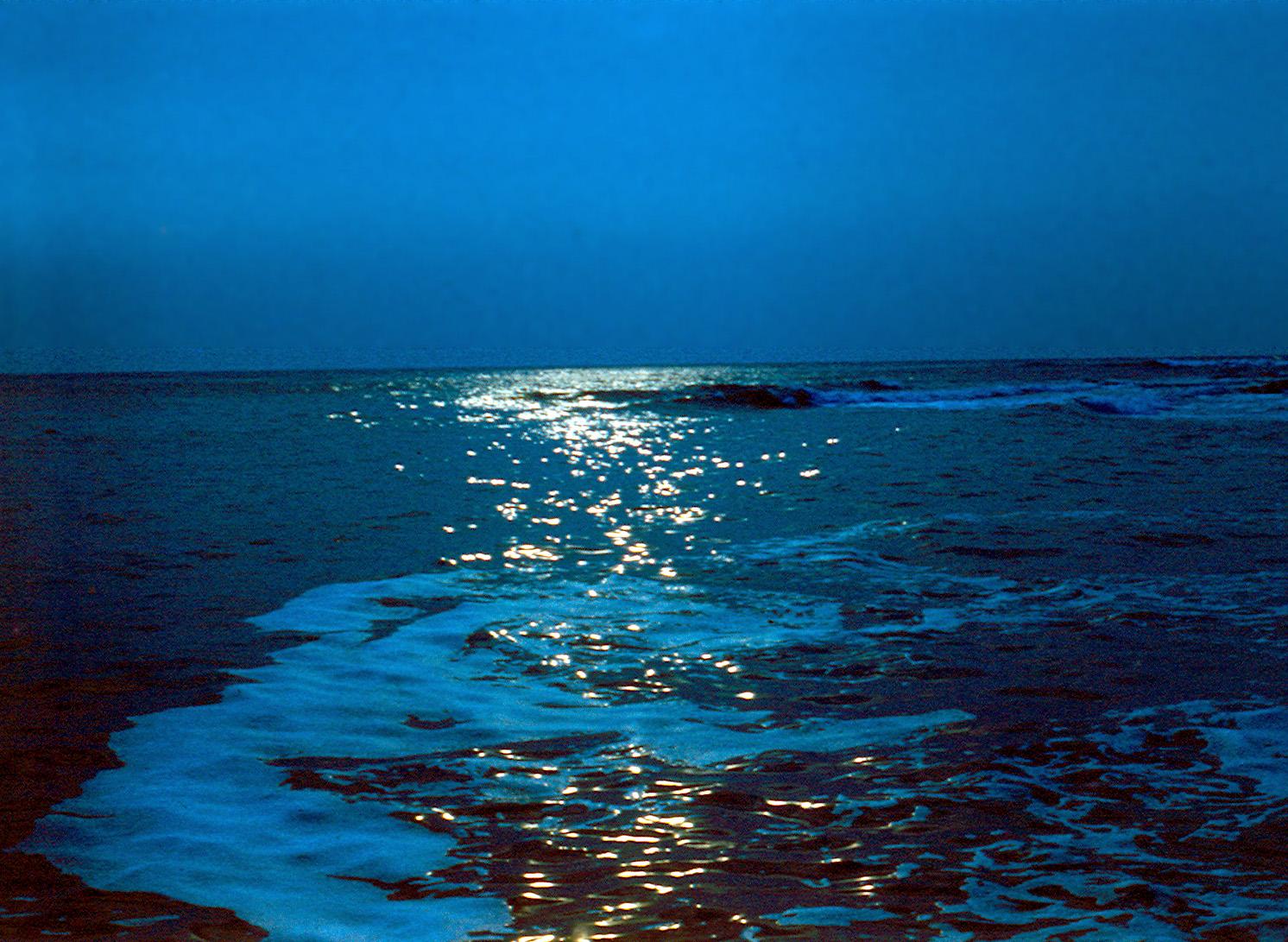 планктон фото на чёрном море