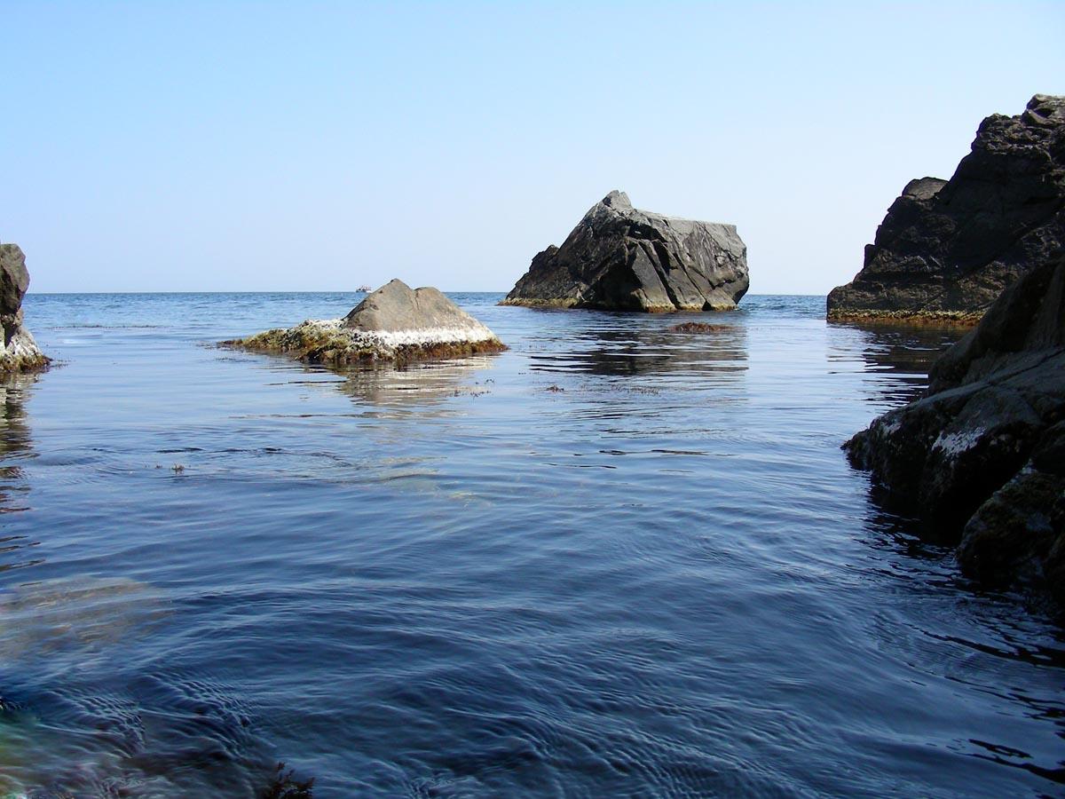 Моллюски попавшие из тихого океана в черное море