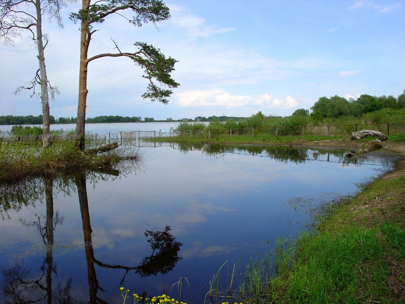 схема растительности озера