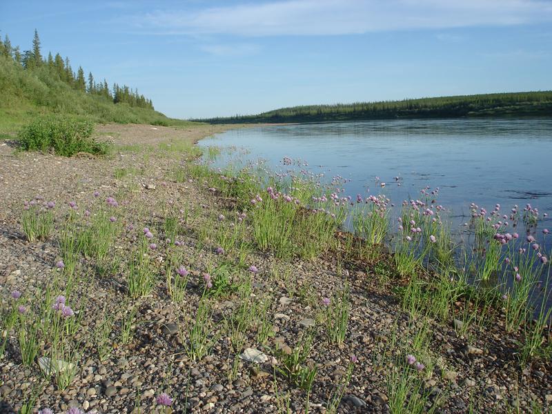 Марха — река в якутии левый приток