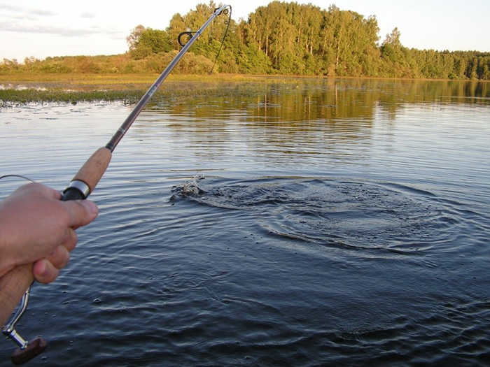 рыбалку скачать бесплатно через торрент