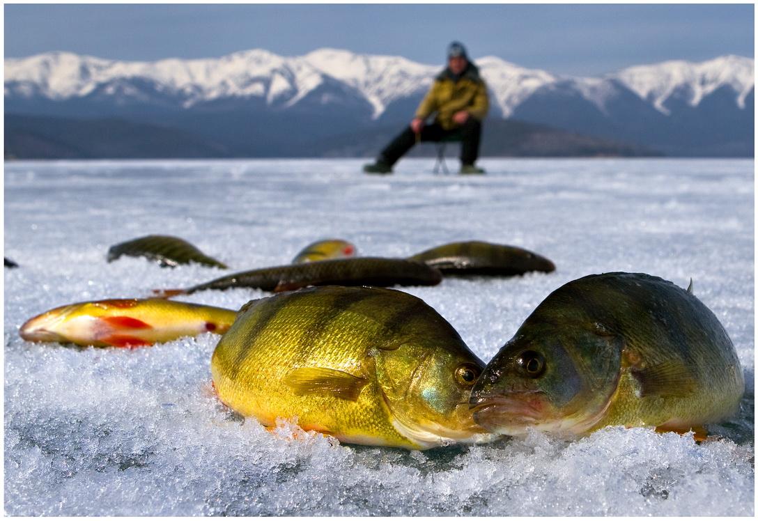 какая прикормка для рыбы эффективно работает ночью
